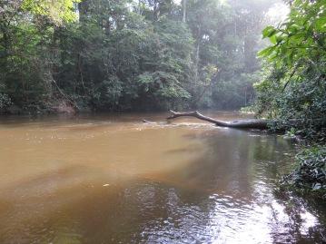 Rivière Tonnegrande
